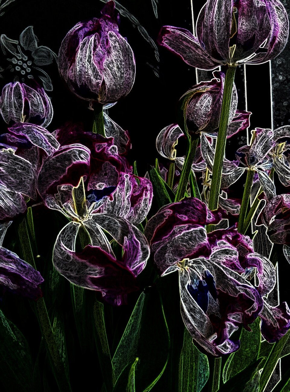 decaying tulips